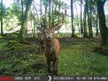 MINOX Wildkamera DTC DMAX Camouflage